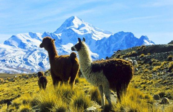 Altiplano 2