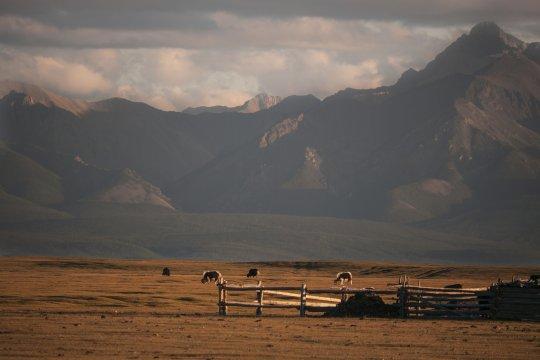 Steppe und Berge