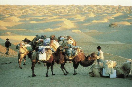 Kameltrekking in der Gobi