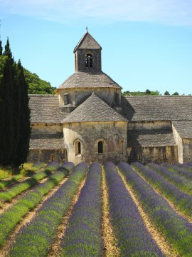 Abbaye de Senanque mit Lavendelfeld