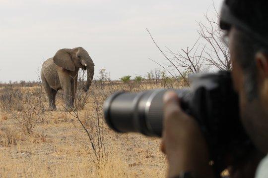 Namibia - Elefanten