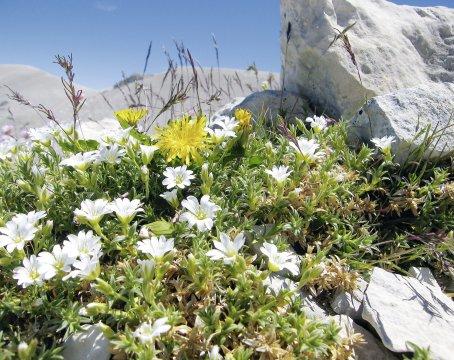 Blumenpracht in den Abruzzen