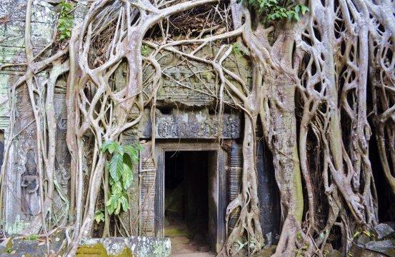 Kambodscha Angkor Ta Prohm_2