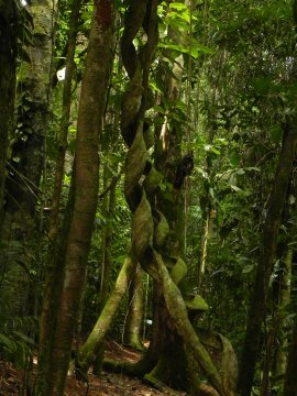 Boca Tapada Rainforest