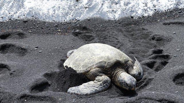 Meerschildkroete Hawaii