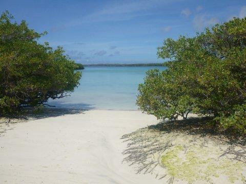 Weisser Strand Tortuga Bay