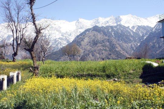 Im Palampur Himachal