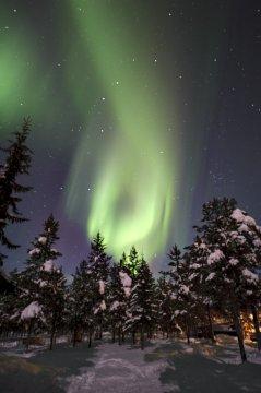 Polarlicht über dem Winterwald_2