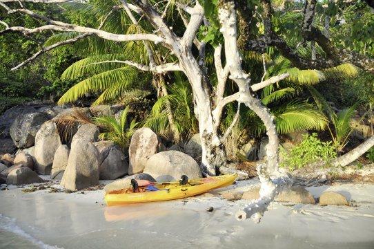 Seychellen willi 3 253_2