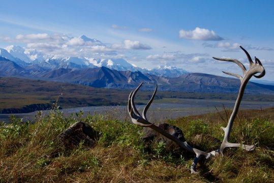Alaska-denali-nationalpark-eilson