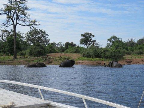 Botswana-Chobe-Riverfront-Boat-Safari