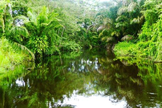 Baeume und Fluss_2