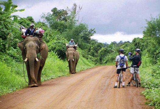Drahtesel trifft Reitelefant