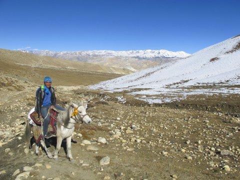 Mustang Tsarang nepalesicher Reiter