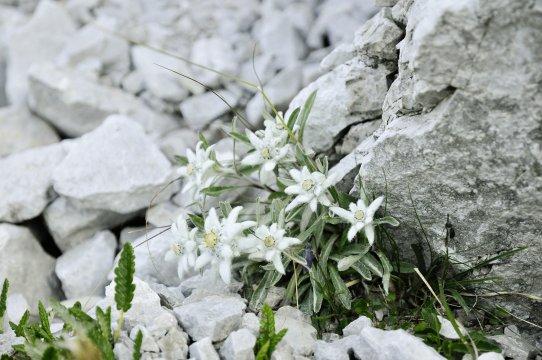 Brenta Dolomiten Klettersteige awr 0093 30_2