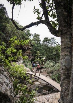 Wanderweg im Royal Natal Nationalpark