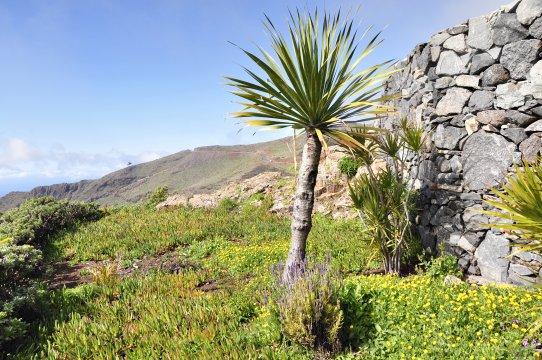 Altes Gehöft auf La Gomera
