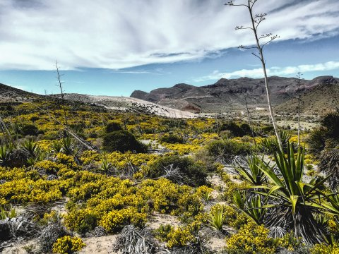 Blumenpracht im Cabo de Gata Naturpark