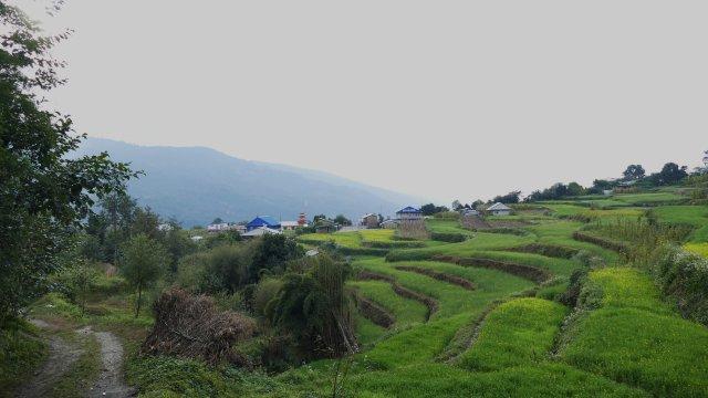 Grüne Terrassen in Swanta