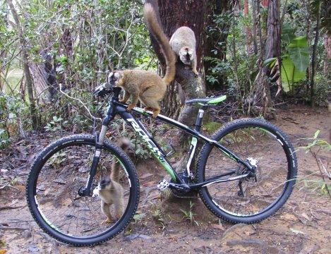 Auf den Spuren der Lemuren_2