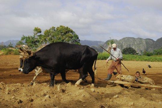 Landleben in Vinales auf Kuba