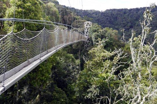 Nyungwe Canopy Trail