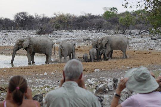 Namibia-Elefantenherde-am-Okaukuejo-Wasserloch-Etoscha
