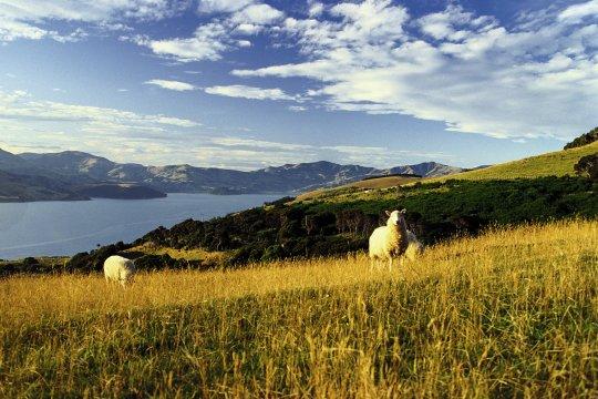 Von Schafen und Seen umgeben