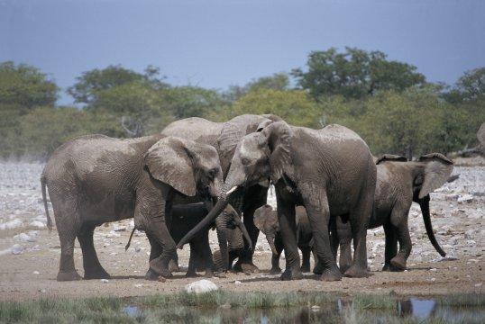 Elefanten im Krüger NP