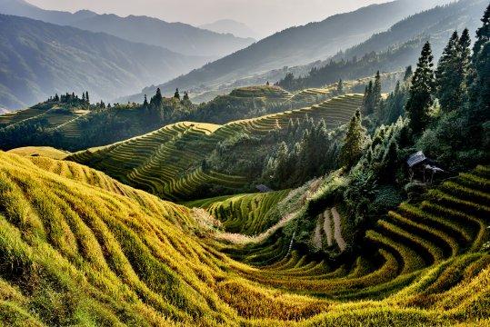 Reisfelder bei Longji Longsheng