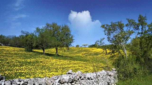 Im Valle d'Itria