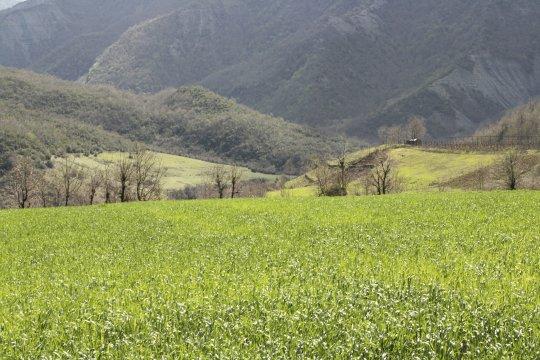 sattgrüne Felder