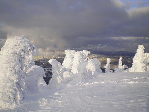 Schneeschuhgehen Baerischer Wald Eisbaeume 3