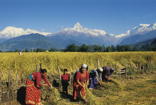 Frauen am Feld - Annapurna 2