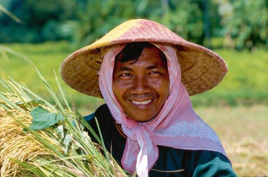Reisfeld Arbeiter Java