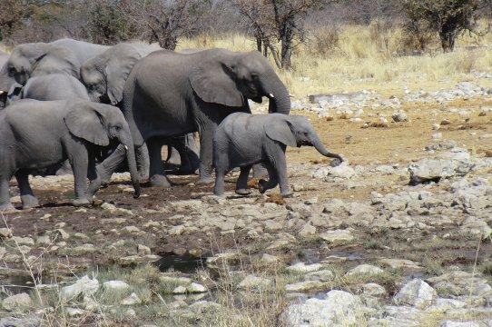 Elefant mit Familie 3