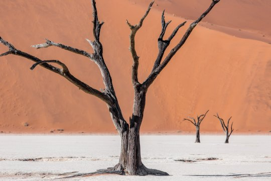 DeadVlei-Baum-Portrait