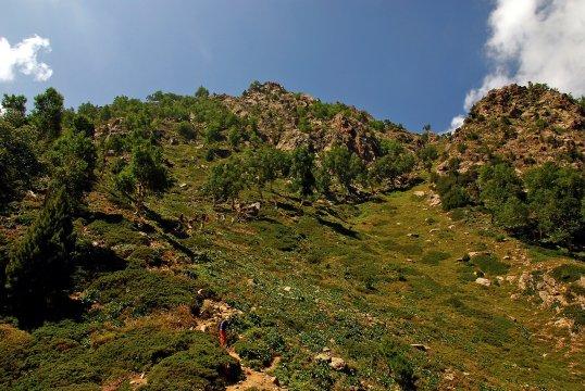 Vegetation an der Nordseite des Nanga Parbat