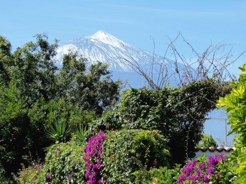 Flora vor dem Teide
