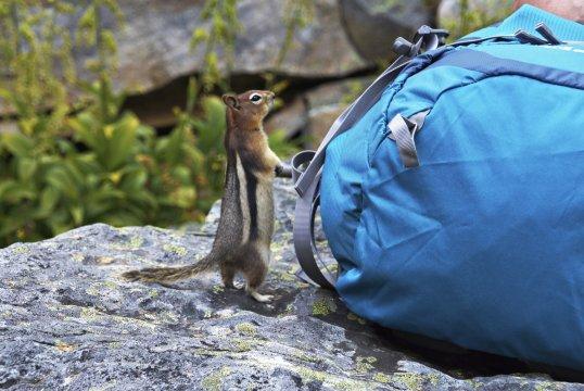 Streifenhörnchen_2