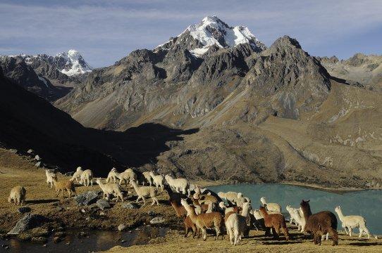 Anden Peru Trekking 3