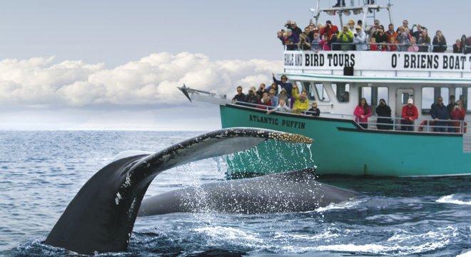 Kanada Neufundland Walbeobachtung