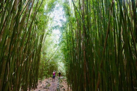 maui_bambuswald_waimuko_falls