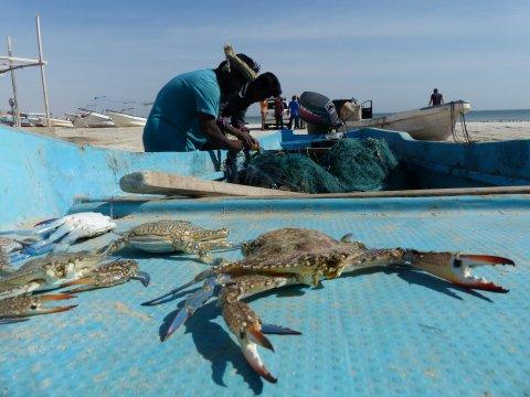 Oman-Fischer-bei-Al-Khaluf