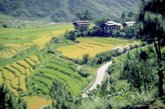 Bhutan's Reisterassen