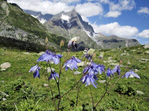 Blumenwiese im Kaukasus