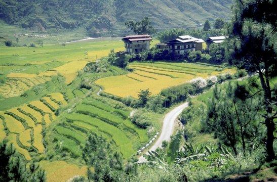 Reisterrassen in Bhutan