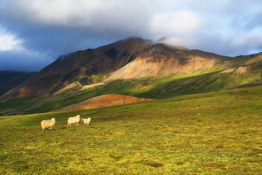 Schafe am Liparithgebirge