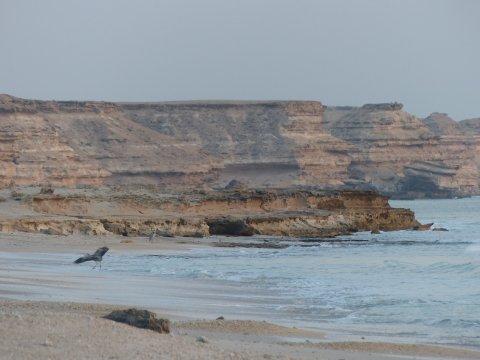 Oman-Küste-Oman-Dhofar-bei-Salalah