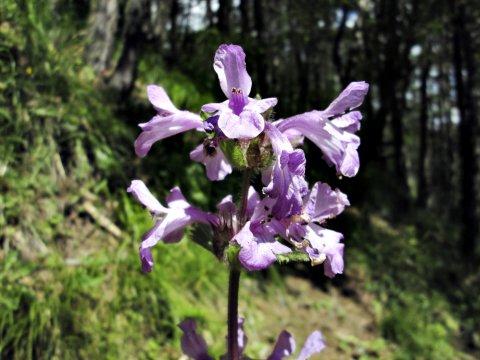 Flora im Nordkaukasus